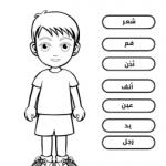 ورقة عمل اجزاء الجسم للاطفال رياض الأطفال