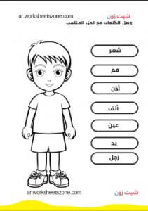 ورقة عمل اجزاء الجسم للاطفال