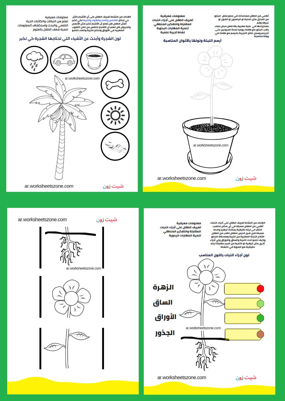 اجزاء النبات بالصور للاطفال تلوين وأنشطة تفاعلية